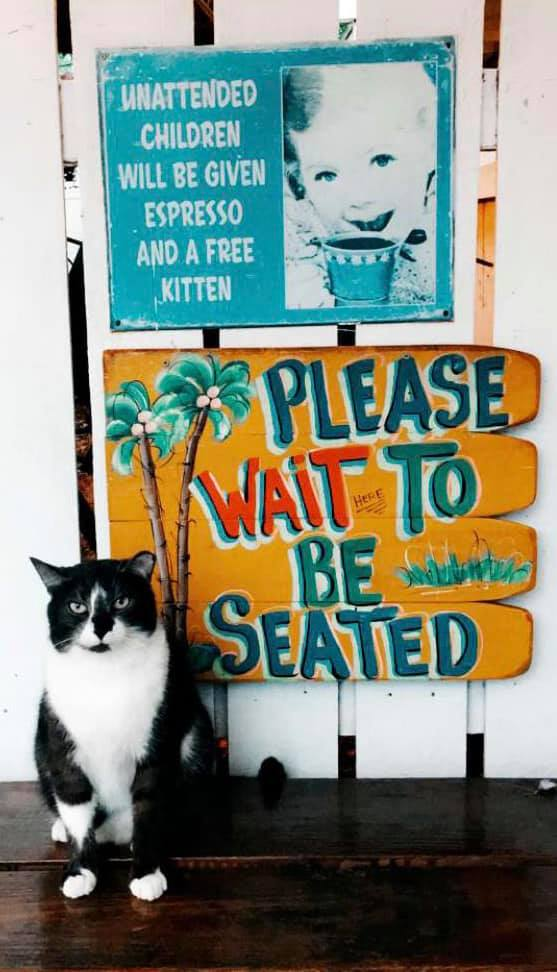 Cat and sign asking guests to wait to be seated